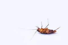 Cockroaches. Dead cockroaches on white background Royalty Free Stock Photography
