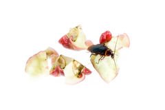 Cockroaches eat rose apple ,Concept of cleanliness. Clean food s. Cockroaches ,eat rose apple  on white background Royalty Free Stock Photos