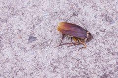 Cockroaches lying dead on the floor. Cokroaches dead Stock Photography