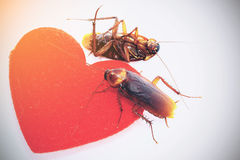 Cockroaches with red hearth,uncouple in love concept,departed loved Royalty Free Stock Photos