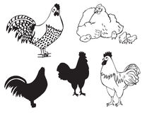 Cocks and hen with chickens Royalty Free Stock Photography