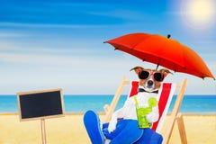 Cocktail da cadeira de praia do cão Fotografia de Stock