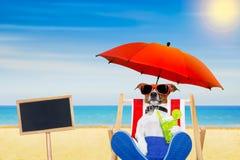 Cocktail da praia do cão Foto de Stock