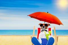 Cocktail da praia do cão Foto de Stock Royalty Free