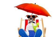 Cocktail da praia do cão Imagem de Stock