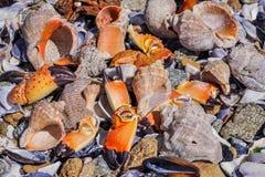 Cocktail dei frutti di mare Immagini Stock Libere da Diritti