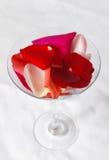 Cocktail della Rosa Fotografia Stock Libera da Diritti