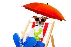 Cocktail della spiaggia del cane Fotografia Stock
