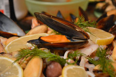 Cocktail des fruits de mer photographie stock libre de droits