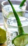 Cocktail di aloe Vera e del succo della noce di cocco Fotografie Stock Libere da Diritti
