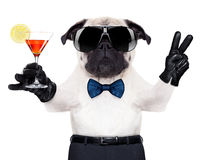 Cocktail  dog Royalty Free Stock Photography