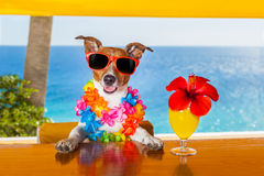 Cocktail dog. Funny cool dog drinking cocktails at the bar in a beach club party with ocean view stock images