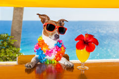 Cocktail dog Stock Images