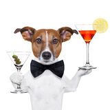 Cocktail dog martini glasses Royalty Free Stock Photography
