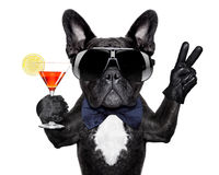Cocktail dog stock photos