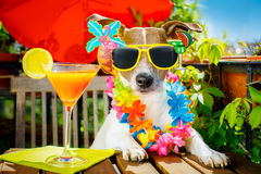 Cocktail drink dog summer holiday vacation on balcony Royalty Free Stock Photos
