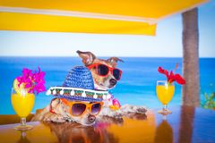 Cocktail drink dogs summer holiday vacation ar the bar royalty free stock image