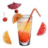 Cocktail e frutos da aquarela ilustração do vetor
