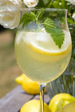 Cocktail with lemon slices and ice cubes Stock Photo