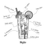 Cocktail mojito and its ingredients. Ink drawing illustration of cocktail mojito and its ingredients in vintage hand drawn style. isolated on white vector illustration