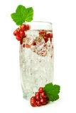Cocktail with red currant Royalty Free Stock Image