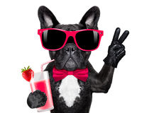Cocktail smoothie dog Royalty Free Stock Photo