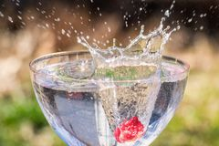 Cocktail splash. A cold cocktail with a splash of fruit royalty free stock photo
