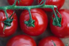 Cocktail tomato close-up stock photo
