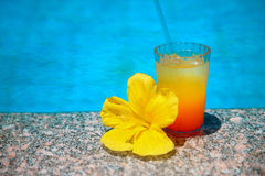 Cocktail with yellow flower over blue surface water background. Exotic vacation. Tropical drink stock photos