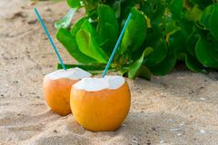 Cocktails in coconuts on sand. Delicious cocktails in coconuts on sandy tropical beach Royalty Free Stock Photo