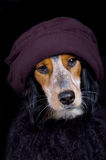Cocky diva dog with hat & boa Stock Photo