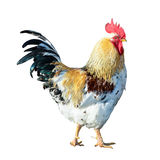 Cocky rooster illustration Royalty Free Stock Photo