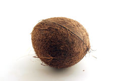 Cocnut. Isolated against light background Stock Images