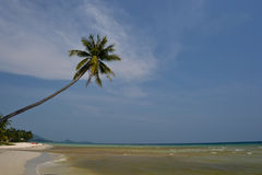 Coco 1 de la playa de Samui Fotos de archivo