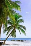 Coco Imágenes de archivo libres de regalías