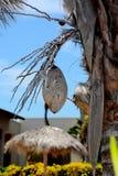 coco Foto de archivo libre de regalías