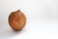 Coco aislado en el fondo blanco Trayectoria de recortes Fotos de archivo