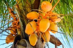 Coco amarillo fotografía de archivo
