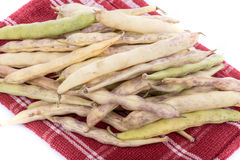 Coco beans Stock Images