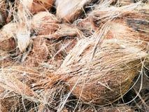 Coco bonito no mercado fotografia de stock royalty free