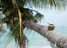 Coco con la paja de beber Foto de archivo libre de regalías