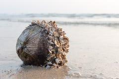 Coco con las cáscaras contra el mar en la playa del arena de mar Fotos de archivo