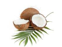 Coco con las hojas Imágenes de archivo libres de regalías