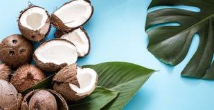 Coco con las hojas tropicales en un fondo azul plano fotografía de archivo