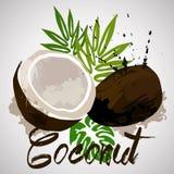Coco con las plantas del chapoteo y del trópico del color Fotografía de archivo