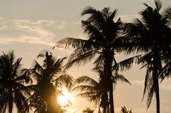 Coco con puesta del sol en naturaleza Foto de archivo libre de regalías