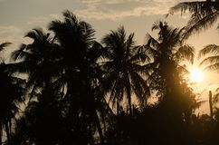 Coco con puesta del sol en naturaleza Fotografía de archivo libre de regalías