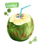 Coco de consumición verde, ejemplo de la acuarela stock de ilustración