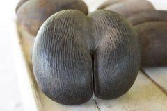 Coco de Mer, gömma i handflatan frukt, Seychellerna öar Arkivfoton