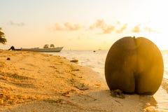 Coco de mer - La Digue - Seychelles Royalty Free Stock Image